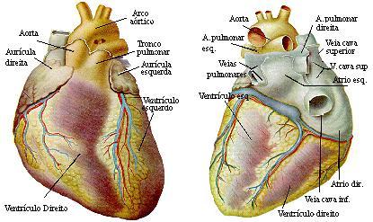 Sistema De Ensino De Fisiologia Cardíaca